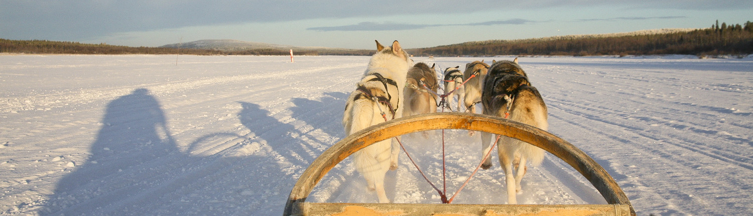 Winters-Lapland-Expedition-Far-East-huskies